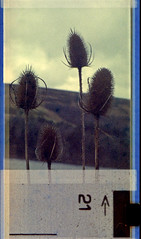 teasels (pho-Tony) Tags: auto camera old color colour miniature boots pentax mark branded 110 spot cast damage aged pocket expired 16mm instamatic cartridge outdated speckle expiredfilm deterioration mottle c41 pentaxauto110 mottling bootsfilm