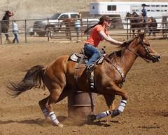 Dewey Barrel Race (Garagewerks) Tags: arizona horse woman sport female race all sony country barrel arena rodeo dewey cowgirl athlete equine 50500mm views50 views100 views200 views250 views150 f4563 slta77v