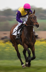 Project Flickr - Motion Blur 2 (Sarah Burnage) Tags: horses motion colors grass race blurry colours jockeys horserace rapeseed silks hurdle hooves projectflickr pointtopoint higheasterpointtopoint2014