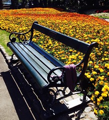 Seat in the marigolds (Photo Trunk) Tags: park blue orange colors gardens bench chair colours seat complementary wellington uploaded:by=flickrmobile flickriosapp:filter=nofilter