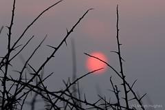 Ar noson fel hon-7251 (www.atgof.co) Tags: clarach sunset bay ceredigion bae machlud pinc pink mieri thorns cymru wales coast arfordir