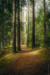 A place to longing (imagomagia) Tags: naturallight path 23mm art nature artphoto artphotography fujifilm light fujiseries tree fujifeed flowersplants fineart wood forest trees fujix xpro1 conceptualphotography
