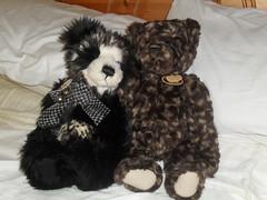 Connie and Tommy (zaramcaspurren) Tags: charliebears teddybear teddybears teddies stuffedtoy stuffedtoys stuffedanimal stuffedanimals plush plushtoy plushies plushie plushtoys softtoys softtoy