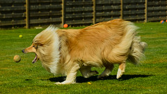 Dog-7825-2 (EB_Creation) Tags: nikon d7100 dog depthoffield dof dx outdoor outside nikkor april amateur 2017 camera lens digital