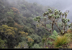 Little World's End, Horton Plains NP, Sri Lanka (JH_1982) Tags: little worlds end view aussicht landscape scenery scenic tree trees nature horton plains np hortonplainsnationalpark llanuras හෝර්ටන් තැන්න ජාතික වනෝද්‍යානය ஓட்டன் சமவெளி தேசிய வனம் national park nationalpark parque nacional parc parco nazionale sri lanka ශ්‍රී ලංකා இலங்கை 斯里蘭卡 スリランカ 스리랑카 шриланка سريلانكا श्रीलंका ประเทศศรีลังกา mist fog foggy misty nebel forest woods jungle urwald wald morning
