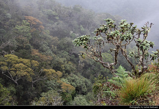 Little World's End, Horton Plains NP, Sri Lanka