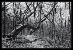 Beaver Lake Trail (evangelos K) Tags: ar arkansas beaverlaketrail cz2470ssm fallen lake path trail trees woods sonya850