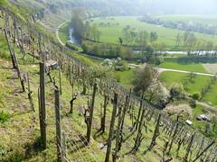 Enzschleife bei Mühlhausen (Baden-Württemberg) (thobern1) Tags: enzschleife enz badenwürttemberg germany enzkreis mühlhausen flussschleife weinberg wingert vineyard