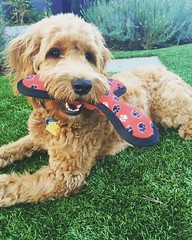 Liesel and Nolan's sweet Beckham loves playing outside!