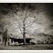 FARM HOUSE AND TREE