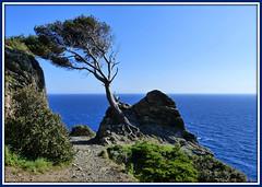 Presqu'île de Giens (myvalleylil1( absente jusqu'au 27 avril)) Tags: france var méditerranée arbre mer