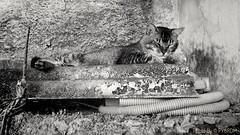 My good friend, Oncinha. A great companion. (PY6RDM) Tags: gato cat moto motog4plus preto branco pretoebranco