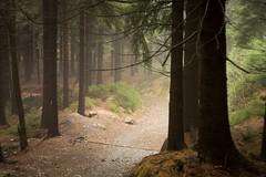 Ještěd (kaddafi210) Tags: pancolar 50mm pancolar1850 1850 m42 samsung samsungnx210 mirrorless czech retro carlzeissjena ausjena gdr nature forest atmosphere moment place light