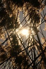12040424 (a.podkowińska) Tags: sun soleil backlight contrejour