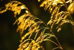 Morning (Matt Champlin) Tags: tuesday zzzzz morning tired work summer gold golden grass life spring springtime nature landscape peace peaceful goodmorning women