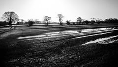 Day_Awakes (PJT.) Tags: morning sunrise sun trees silhouette lancashire lydiate merseyside field ponding farm railway line cheshire puddle shadow highlight row boundary