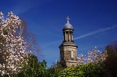 Magnolia and Spire (Sundornvic) Tags: church shrewsbury shropshire stchads town centre quarry park grass trees blue sky clouds light tower cross