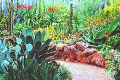 desert magic (LotusMoon Photography) Tags: desert plants cactus nature botanicgarden painterly painted digitalpainting photomanipulation photoshop photoart photopainting texture vividcolor vibrant filterforge annasheradon lotusmoonphotography