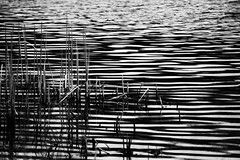 Wetlands Afternoon (smfmi) Tags: chippewanaturecenter wetlands blackandwhite monochrome michigan frohm pentax ks2 justpentax pentaxlife silverefexpro silverefexpro2 nik