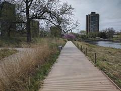 Boardwalk (ancientlives) Tags: chicago illinois usa lincolnpark natureboardwalk nature walking friday april 2017 spring travel