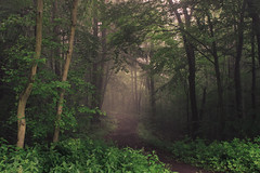 Ways in the Fog (Netsrak) Tags: baum forst landschaft natur nebel wald fog forest landscape mist nature tree trees woods bäume eifel