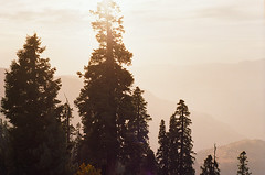 (obnimakina) Tags: film 2016 pakistan hills mountains heaven conifers sunset outdoor landscape khyberpakhtunkhwaprovince himalayas paye shogran siripaye