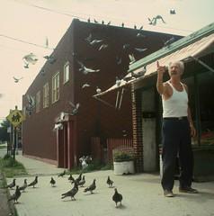 NY in the 80s 548 (stevensiegel260) Tags: birds pigeons street newyork queens