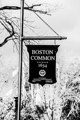 Boston Common (Thomas Hawk) Tags: boston bostoncommon massachusetts usa unitedstates unitedstatesofamerica bw fav10