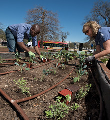 20170405-AMS-LSC-2011 (USDAgov) Tags: usda departmentofagriculture usdepartmentofagriculture peoplesgarden nationalmall washington dc planting seed sprout tools soil garden transplant plant align spring coolweather