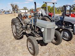1956 Ferguson 35 Tractor (Five Starr Photos ( Aussiefordadverts)) Tags: masseyferguson35tractor masseyfergusontractor masseyferguson