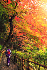 Japanese woman walking with traditional kimono in autumn japan (Krunja) Tags: asian attractive autumn beautiful beauty clothes color colorful costume couple culture design dress enjoy fashion female forest garden geisha girl green japan japanese kimono kyoto ladies leaf leaves maple nature orange outdoor park people portrait red religion stone temple tourism tradition traditional travel tree trees visitor walk walking wearing woman women yellow young zen