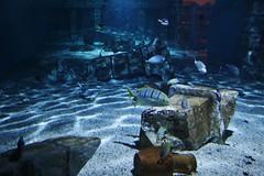 Under Water (Hugo von Schreck) Tags: hugovonschreck underwater unterwasser aquarium canoneos5dsr tamronsp35mmf18divcusdf012 ngc mehlis thüringen deutschland