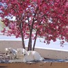 Pups On Bench (suenosdeuomi) Tags: isabella sumo bench blossoms tree santafe newmexico canons90