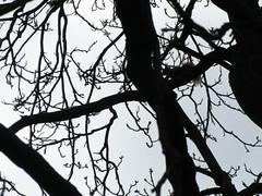 IMG_7338_Fotor01 (Ela's Zeichnungen und Fotografie) Tags: hannover landschaft natur tier eichhörnchen baum äste sonnenlicht himmel schwarzweis