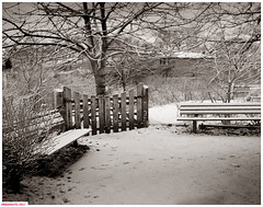 Benches in spring (DelioTO) Tags: 4x5 adoxchs100 april blackwhite botanical city d23 duotone f175 landscape natparks ontario pinhole spring toronto trails woods autaut