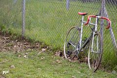 wec Monza (federicopavan1) Tags: bike sportivebike competition greengrass fpphotographer monza wec2017 wec eos700d entrylevel europe federicophotographer canon canoneos700d colors canon55250 lents55250 reflex italy dslr fotografia bicidacorsa