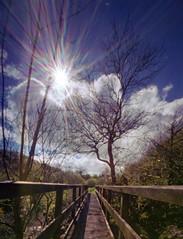 Oak leafs and waterfalls (wheehamx) Tags: pinhole goldenberry linn waterfall dalry colour wide angle