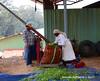 Weighing the pickers work - Highfields Tea Factory - Coonoor Tamil Nadu India (WanderingPhotosPJB) Tags: india tamilnadu ooty coonoor teaplantation teapickers bags tea weighing scales highfieldsteafactory