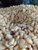 Maíz 🌽📷 (dianarivera4) Tags: maíz méxico lomabonitaoaxaca cultivo cosecha cosechas granos vida motog4plus motorola