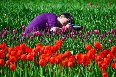 Into it (James_D_Images) Tags: tulip festival abbotsford british columbia photographer camera nikon shootingtheshooter crouching