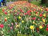 "2017-04-22          De Zeemansloop       41 Km  (43) • <a style=""font-size:0.8em;"" href=""http://www.flickr.com/photos/118469228@N03/34202240705/"" target=""_blank"">View on Flickr</a>"