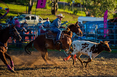 Roping-the-bull_DSC5658 (Mel Gray) Tags: dungogrodeo dungogrodeo2017 dungog newcastle hunterregion annualevent eastersaturday melgrayphotography cowboys cowgirls equestrianevents