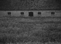 COLourS. (Warmoezenier) Tags: black blanco boerderij colours farm kleur koolzaad negro vlaanderen white wit zeeuws zwart