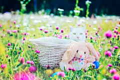 Henry's first Easter (CarmenSisson) Tags: cat kitten animal pet whitecat easter flowers field basket easterbunny holidays happyeaster