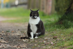 (nettisrb) Tags: chat kater
