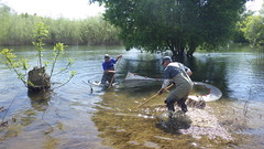 Floodplain Seining