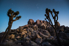 Orion Rising (John Bradtke) Tags: stars orion constellations astronomy astrophotography california joshuatree outdoors night nighttime darkness trees nature wild desert dusk