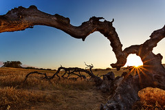 The Key (Justin Lowery) Tags: california sun tree field star southerncalifornia starburst sunstar santarosaplateau inlandempire riversidecounty thenatureconservancy canon6d
