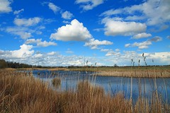 Lake & Cloud (Rob Felton) Tags: blue sky lake reflection water grass clouds landscape bedford scenic bedfordshire felton lumen 100acre meadowlane robertfelton bedfordrivervalleypark