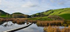 Pekapeka Wetland (flyingkiwigirl) Tags: swamp hastings wetland pekapeka raupo pakipaki